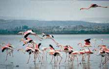 Larnaka zoutmeer Cyprus