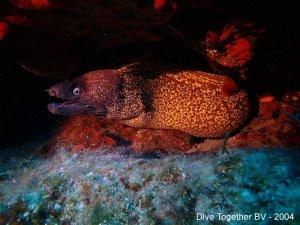 De prachtige onderwaterwereld van Griekenland