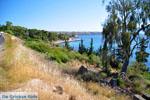 Aeginitissa | Aegina | De Griekse Gids foto 1 - Foto van De Griekse Gids