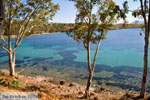 Aeginitissa | Aegina | De Griekse Gids foto 8 - Foto van De Griekse Gids