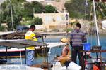 Souvala | Aegina | De Griekse Gids foto 9 - Foto van De Griekse Gids