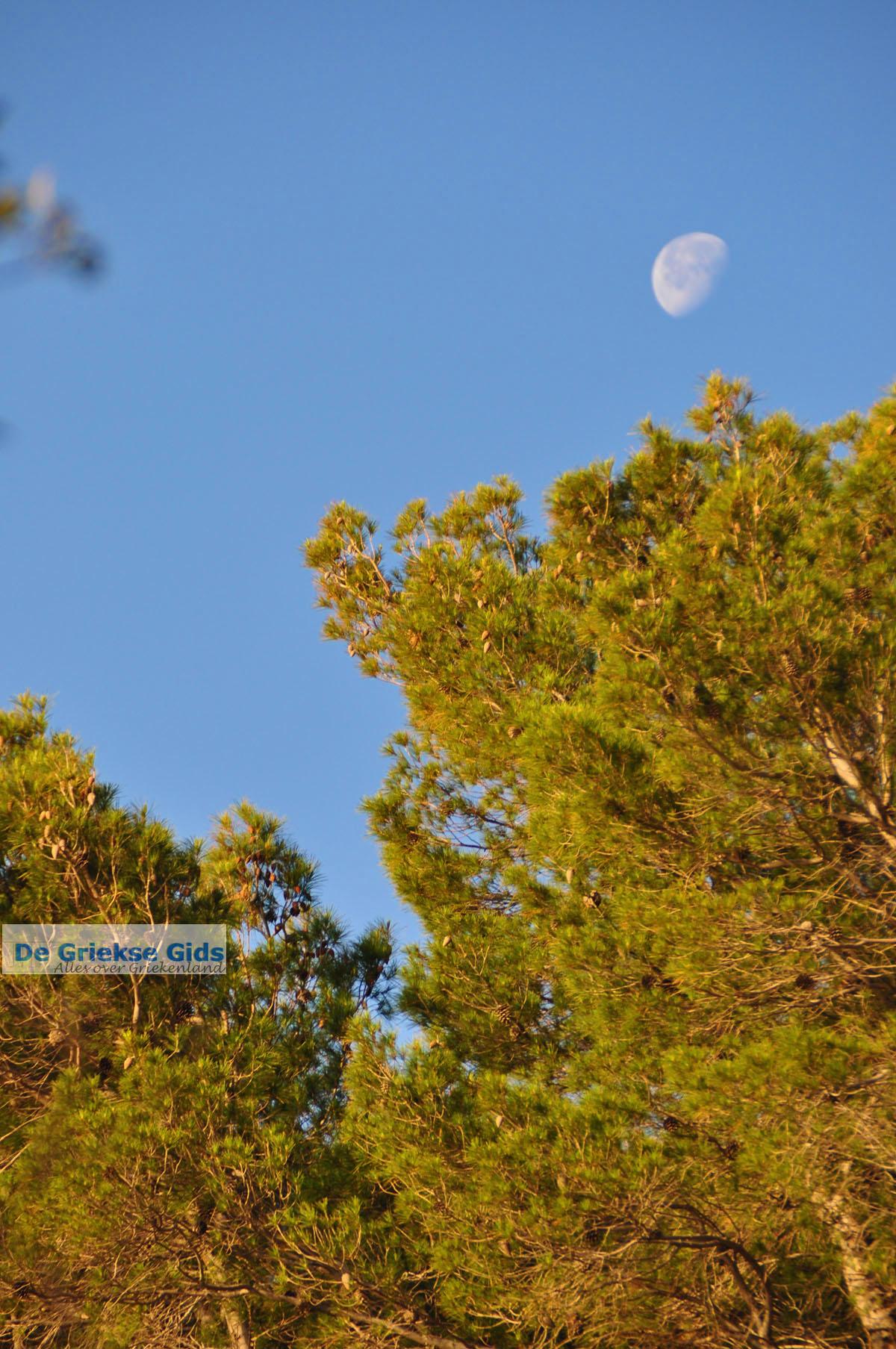 foto Dennenbomen Agkistri | Griekenland 1