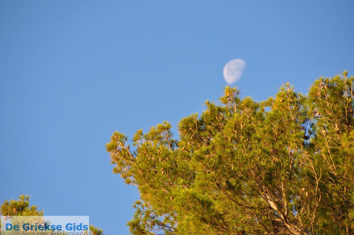 foto Dennenbomen Agkistri | Griekenland 2