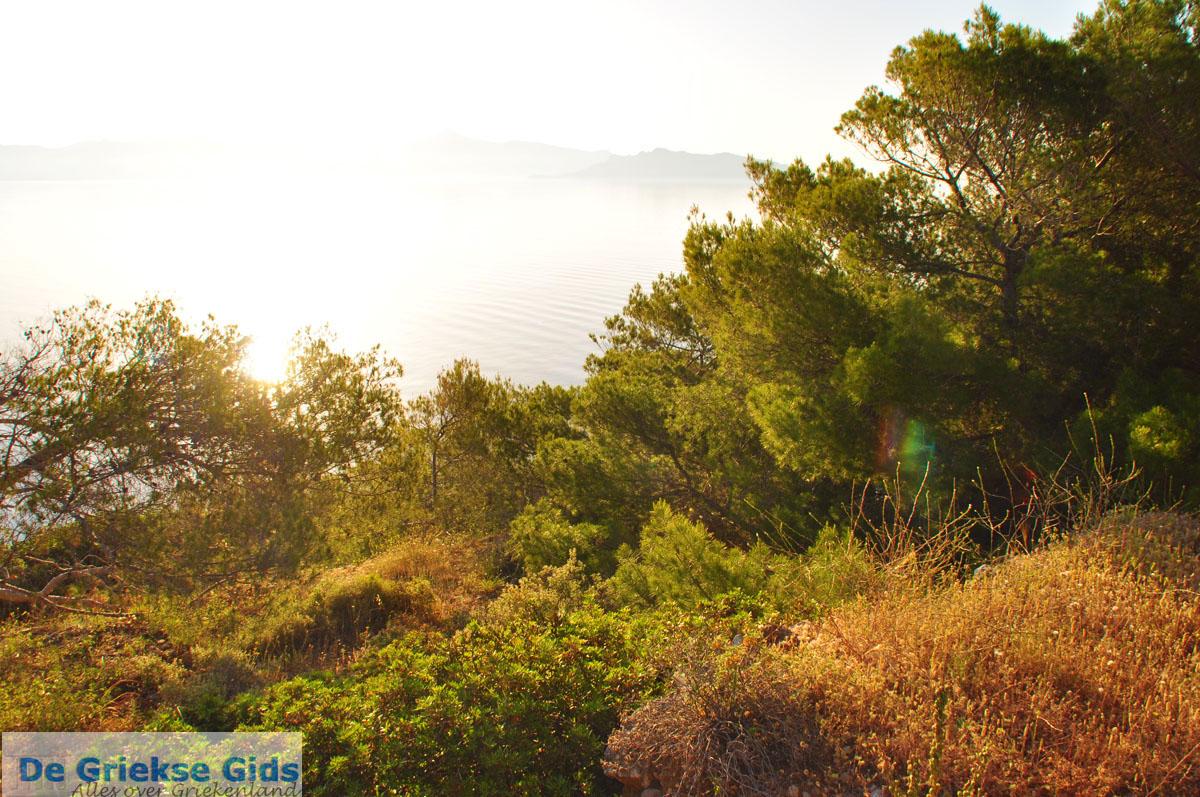 foto Dennenbomen Agkistri | Griekenland 4