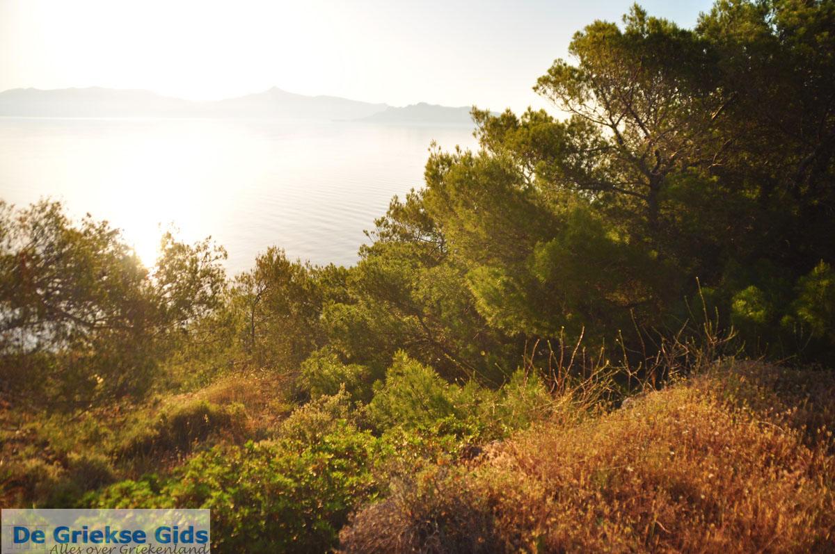 foto Dennenbomen Agkistri | Griekenland | De Griekse Gids foto 5