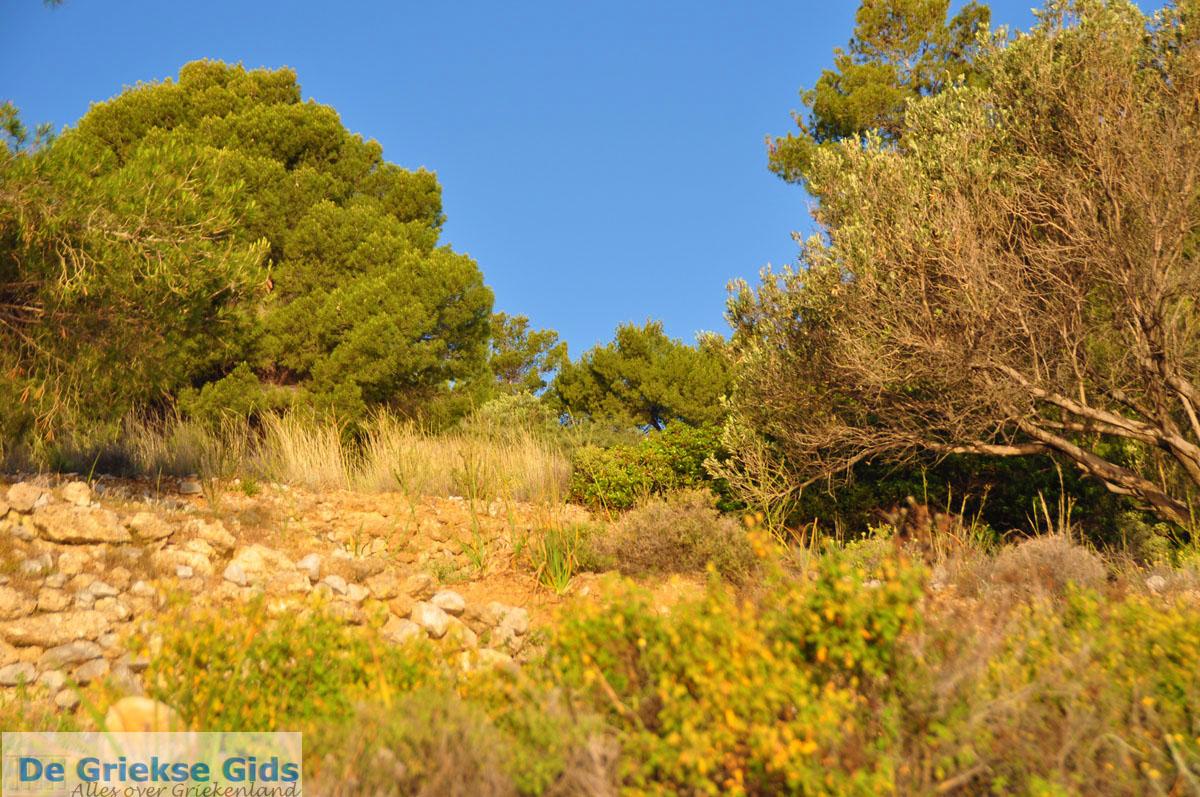 foto Dennenbomen Agkistri | Griekenland | De Griekse Gids foto 7