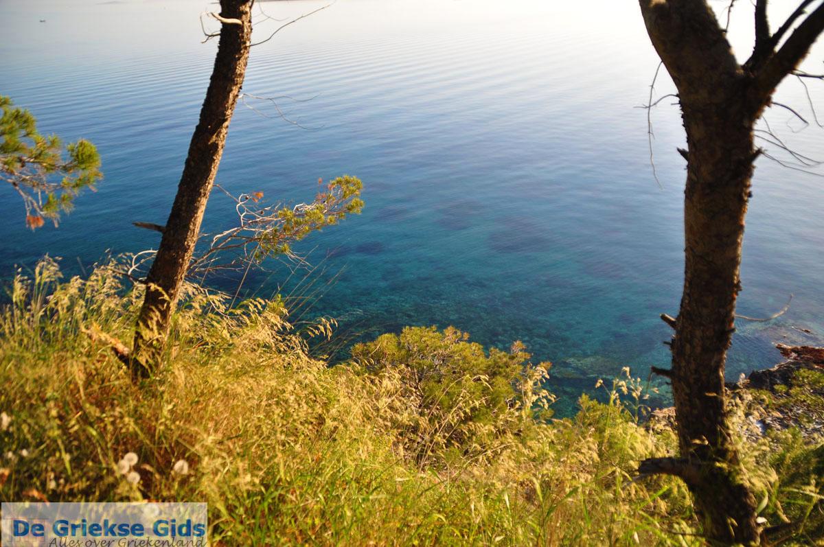 foto Dennenbomen Agkistri | Griekenland 8