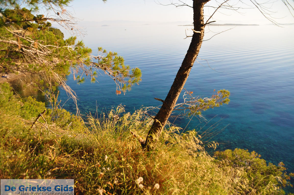 foto Dennenbomen Agkistri | Griekenland | De Griekse Gids foto 9