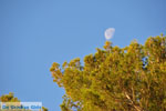 Dennenbomen Agkistri | Griekenland | De Griekse Gids foto 2 - Foto van De Griekse Gids