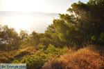 Dennenbomen Agkistri | Griekenland | De Griekse Gids foto 5 - Foto van De Griekse Gids