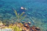 In de bloei | Agkistri Griekenland | De Griekse Gids - Foto van De Griekse Gids