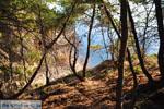 Klein zandstrand tussen de dennebomen bij Skala | Agkistri Griekenland | Foto 1 - Foto van De Griekse Gids