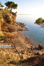 Klein zandstrand tussen de dennebomen bij Skala | Agkistri Griekenland | Foto 4 - Foto van De Griekse Gids