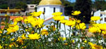Agkistri (Agistri of Angistri) | Saronische eilanden | Foto 10 - Foto van Henriette en Bryan Robinson (Agistri Club)