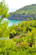 Chrisi Milia | Alonissos Sporaden | De Griekse Gids foto 25 - Foto van De Griekse Gids