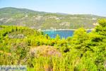 Tzortzi | Alonissos Sporaden | De Griekse Gids foto 1 - Foto van De Griekse Gids
