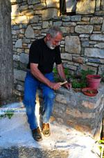 Noten kraken in Alonissos stad | Sporaden | De Griekse Gids - Foto van De Griekse Gids