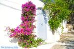 Alonissos stad (Chora) | Sporaden | De Griekse Gids foto 91 - Foto van De Griekse Gids