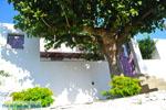 Alonissos stad (Chora) | Sporaden Griekenland foto 115 - Foto van De Griekse Gids