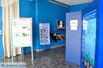 MOM, bescherming Monachus-Monachus zeehonden Alonissos | Sporaden foto 2 - Foto van De Griekse Gids