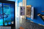 MOM, bescherming Monachus-Monachus zeehonden Alonissos | Sporaden foto 4 - Foto van De Griekse Gids