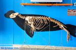 MOM, bescherming Monachus-Monachus zeehonden Alonissos | Sporaden foto 7 - Foto van De Griekse Gids