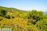 Steni Vala | Alonissos Sporaden | De Griekse Gids foto 5 - Foto van De Griekse Gids