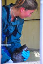 MOM, bescherming Monachus-Monachus zeehonden Alonissos | Sporaden foto 12 - Foto van De Griekse Gids
