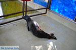 MOM, bescherming Monachus-Monachus zeehonden Alonissos | Sporaden foto 13 - Foto van De Griekse Gids