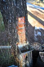 Hars bij bossen van Agioi Anargiri klooster | Alonissos Sporaden | De Griekse Gids foto 1 - Foto van De Griekse Gids