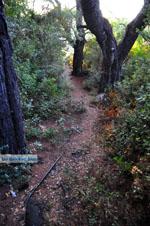 Wandelen bossen bij Agioi Anargiri | Alonissos Sporaden | De Griekse Gids - Foto van De Griekse Gids