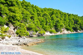 Milia Alonissos | Sporaden | De Griekse Gids foto 1 - Foto van De Griekse Gids