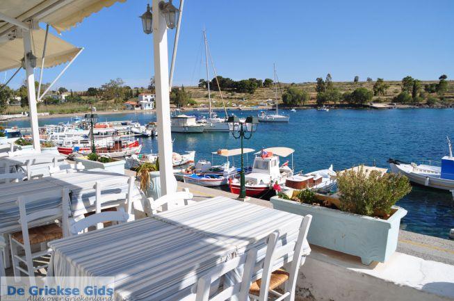 Peridka Aegina