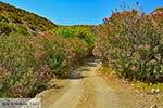 Agios Konstantinos Astypalaia - Dodecanese foto 16 - Foto van De Griekse Gids