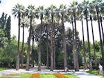 Palmbomen Ethnikos Kipos - Nationale tuin Athene - Foto van De Griekse Gids