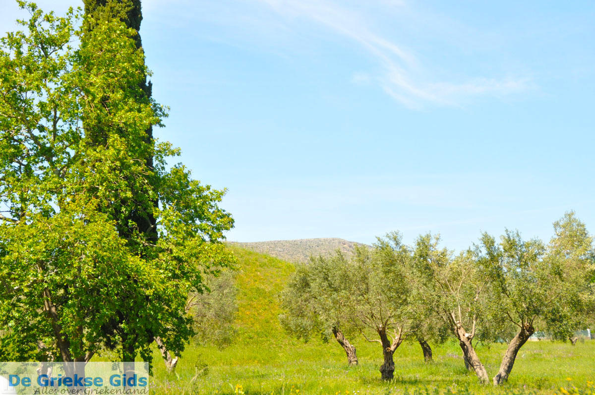 foto Marathon | Attica - Atheense Riviera | De Griekse Gids foto 5
