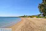 Nea Makri bij Athene | Attica - Atheense Riviera | De Griekse Gids foto 1 - Foto van De Griekse Gids