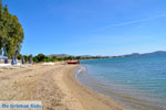 Nea Makri bij Athene | Attica - Atheense Riviera | De Griekse Gids foto 4 - Foto van De Griekse Gids