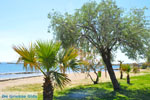 Nea Makri bij Athene | Attica - Atheense Riviera | De Griekse Gids foto 10 - Foto van De Griekse Gids