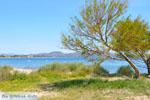 Nea Makri bij Athene | Attica - Atheense Riviera | De Griekse Gids foto 41 - Foto van De Griekse Gids