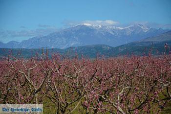 Onderweg van Giannitsa naar Edessa | Pella Macedonie foto 8 - Foto von GriechenlandWeb.de