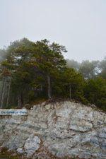 Dennenbossen bij Olympus | Pieria Macedonie | Griekenland - Foto van De Griekse Gids