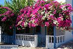 GriechenlandWeb Nimborio Chalki - Insel Chalki Dodekanes - Foto 129 - Foto GriechenlandWeb.de
