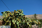 Nimborio Chalki - Eiland Chalki Dodecanese - Foto 136 - Foto van De Griekse Gids