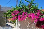 GriechenlandWeb.de Nimborio Chalki - Insel Chalki Dodekanes - Foto 198 - Foto GriechenlandWeb.de