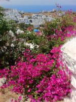 GriechenlandWeb.de Uitzicht over Ios Stadt | Insel Ios | GriechenlandWeb.de - Foto N.E. van Wageningen