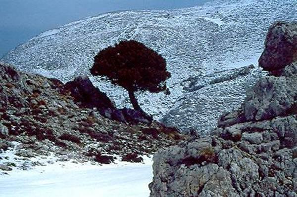 Sneeuw op de Parnassos.  Foto van Karle Sykora