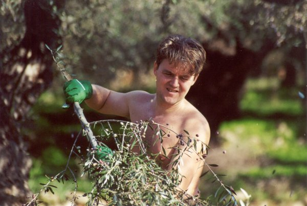 Olijven plukken Peloponnesos