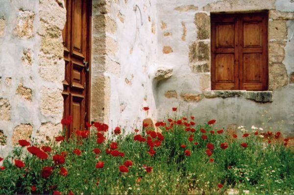 Papavers in Meteora