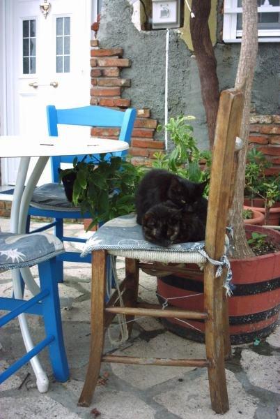 Samos in de winter, ook de katten van Kokkari hebben rust  - Foto: Renée Mof